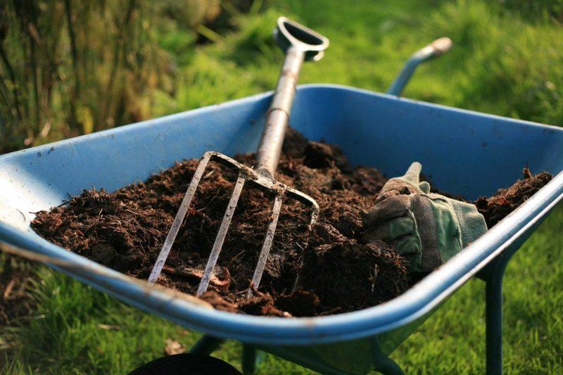 Никакой пользы:какие растения нельзя подкармливать навозом