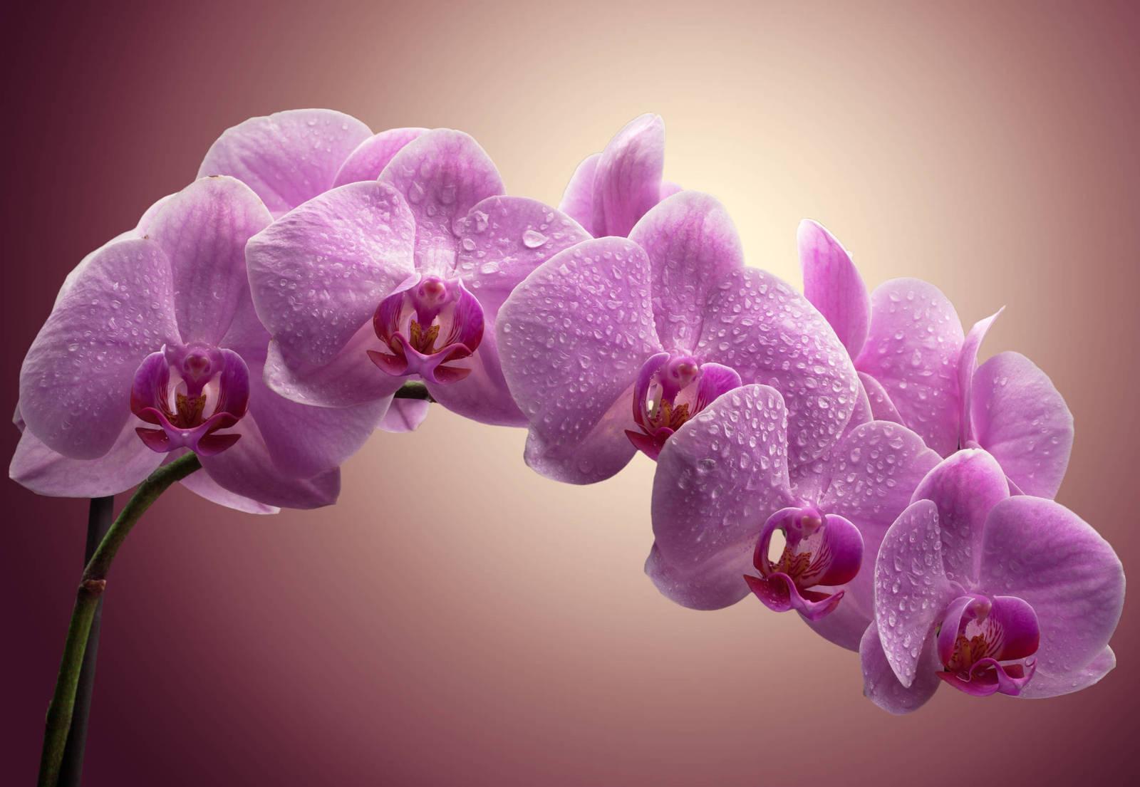 Красивые картинки орхидеи на рабочий стол
