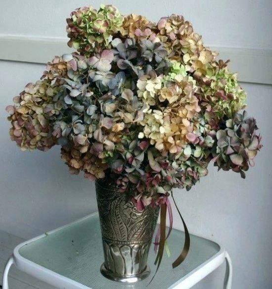Высушенные цветы гортензии