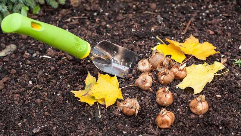 Осенние хлопоты: какие цветы нужно успеть посадить под зиму