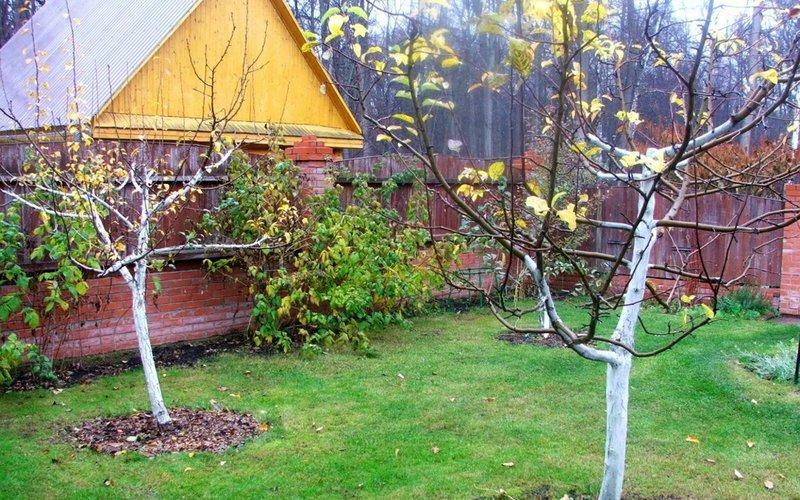 Осенняя обработка яблонь: как не датьвредителям перезимовать в вашем саду