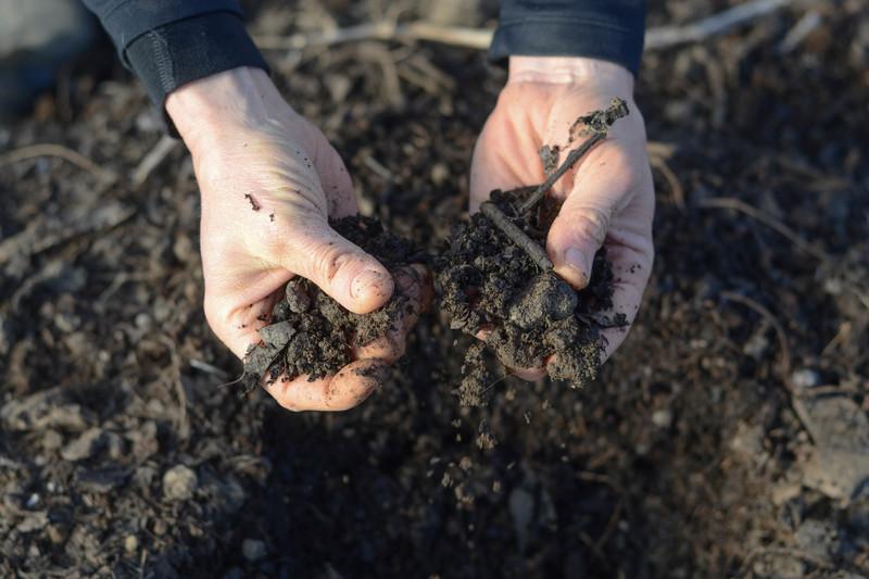Чем обработать землю от проволочника осенью: средства на любой вкус и кошелёк