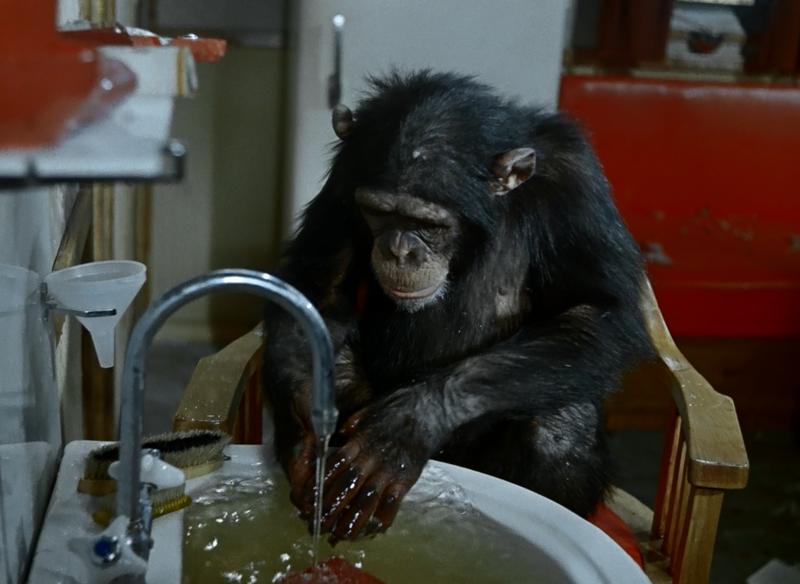 Тест: угадываем любимые советские фильмы про животных по 1 кадру