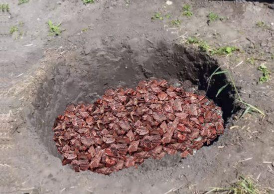 Посадочная яма для розы