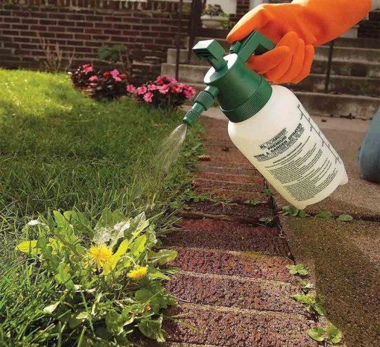 Опрыскивание сорняков гербицидом