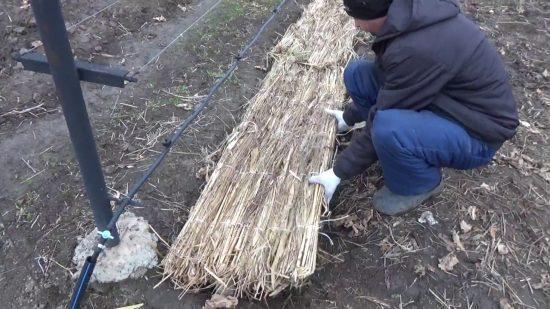 Укрытие камышовыми матами