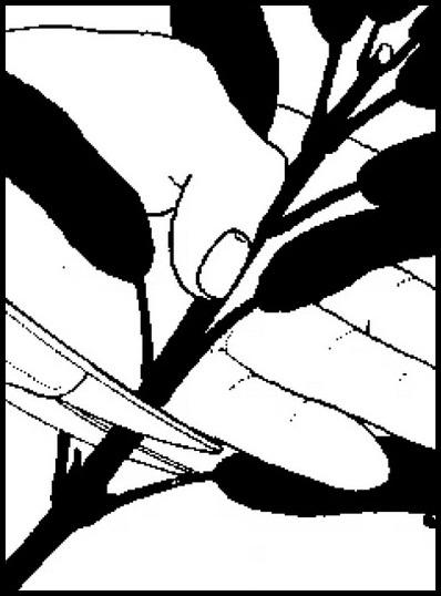 Ножницы отрезают поддерживаемый рукой побег растения