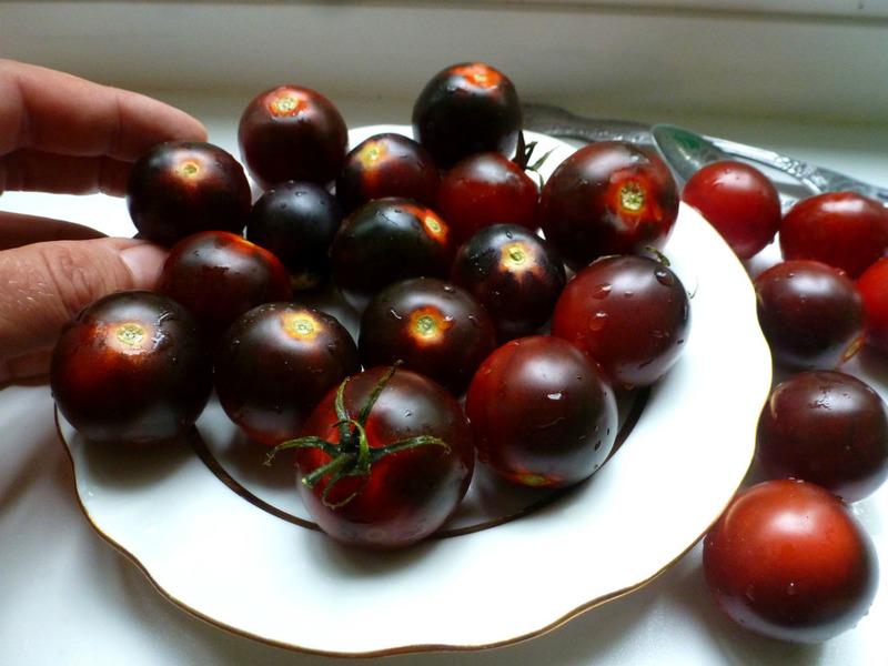 На вид необычные, а на вкус отличные: обзор чёрных сортов томатов