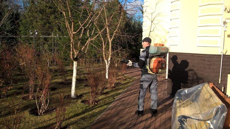 Обработка сада перед зимой: чем опрыскать от всех болезней
