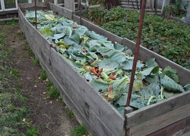 Ленивый компост: готовим удобрение прямо на грядке