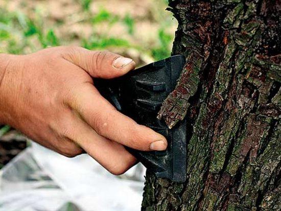 Очистка дерева от мха