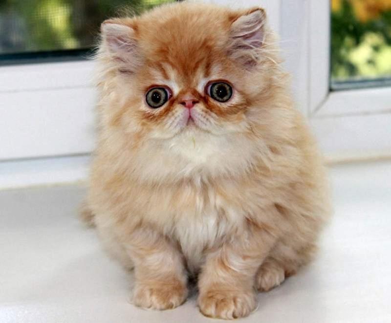 Питомец или игрушка: 10 самых милых животных в мире