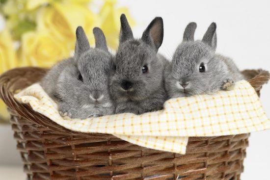Кролики в корзине