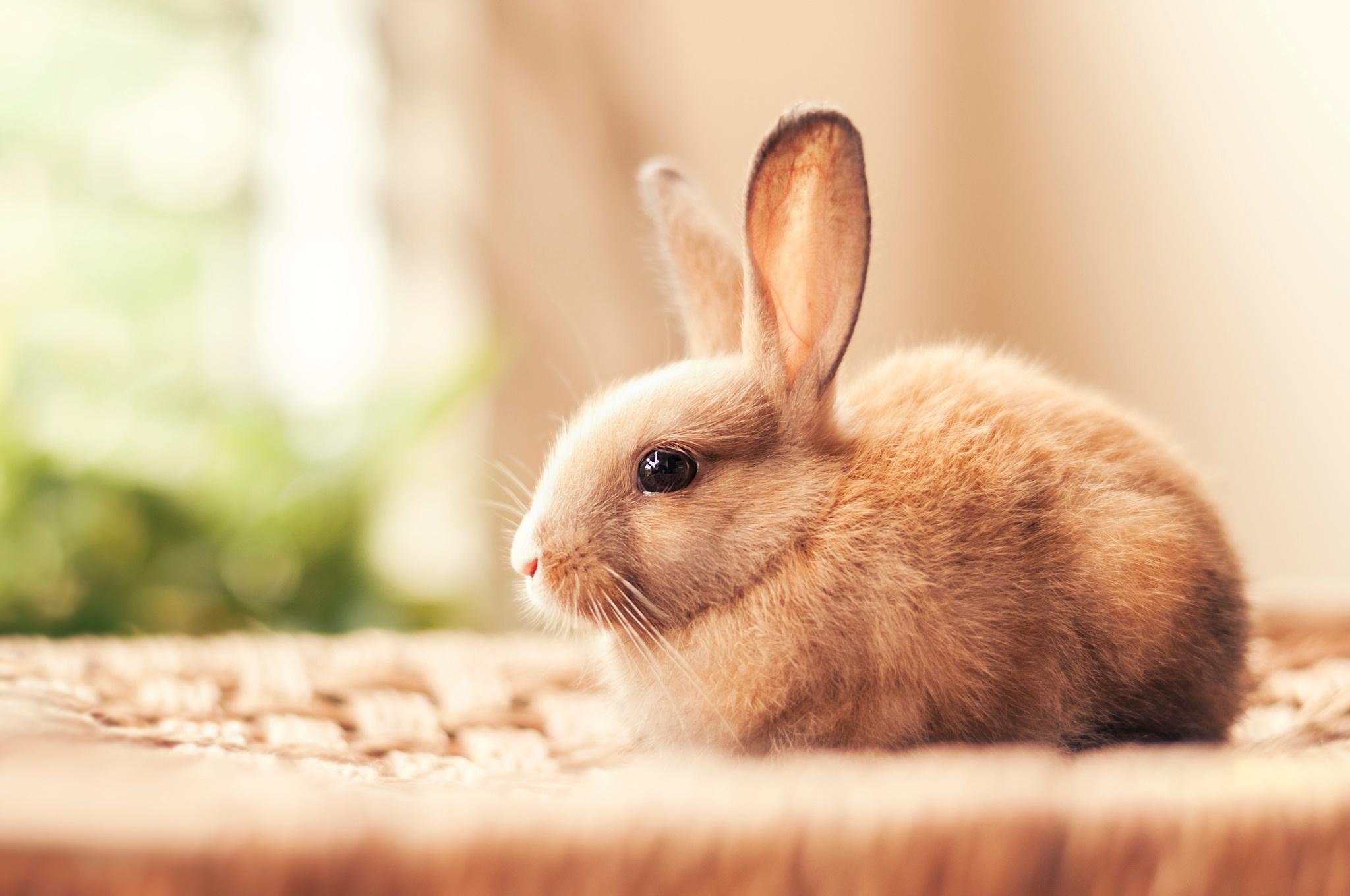 Загадка на внимательность: ищем кролика среди котов