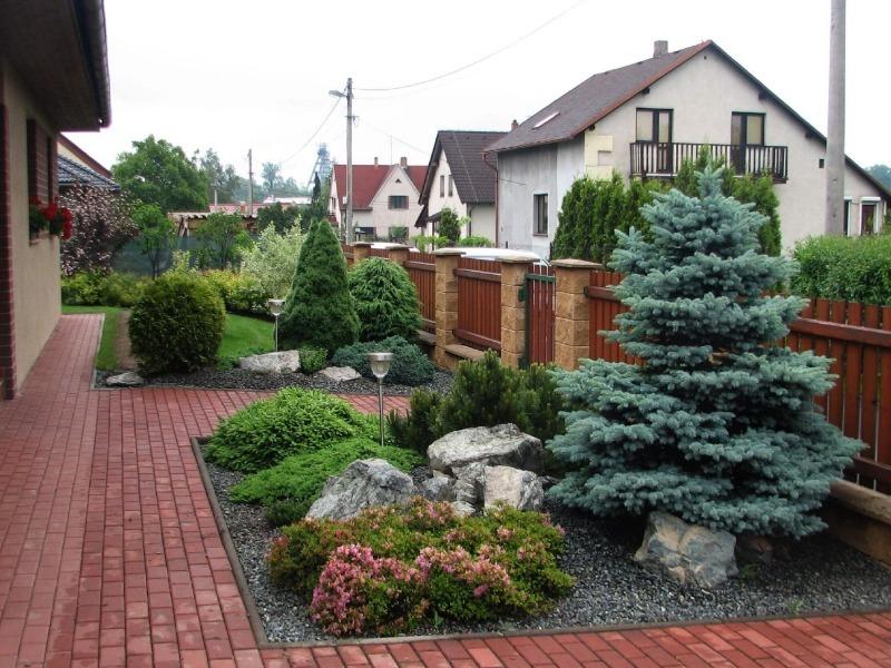 Почему хвойные деревья нельзя сажать на даче