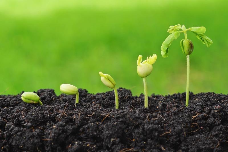 7 способов сохранить семена до следующей посадки, так, чтобы они дружно взошли