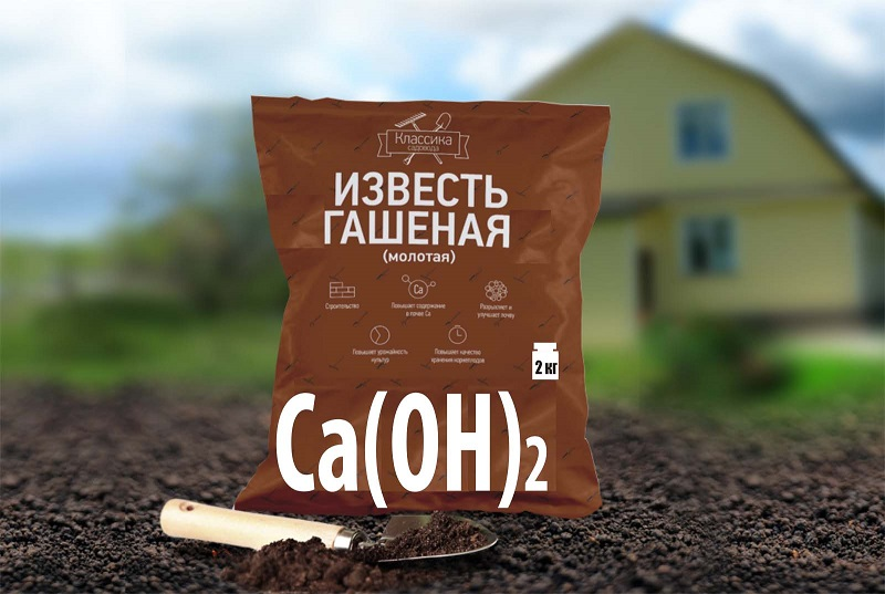 6 эффективных способов обработки почвы от грибка