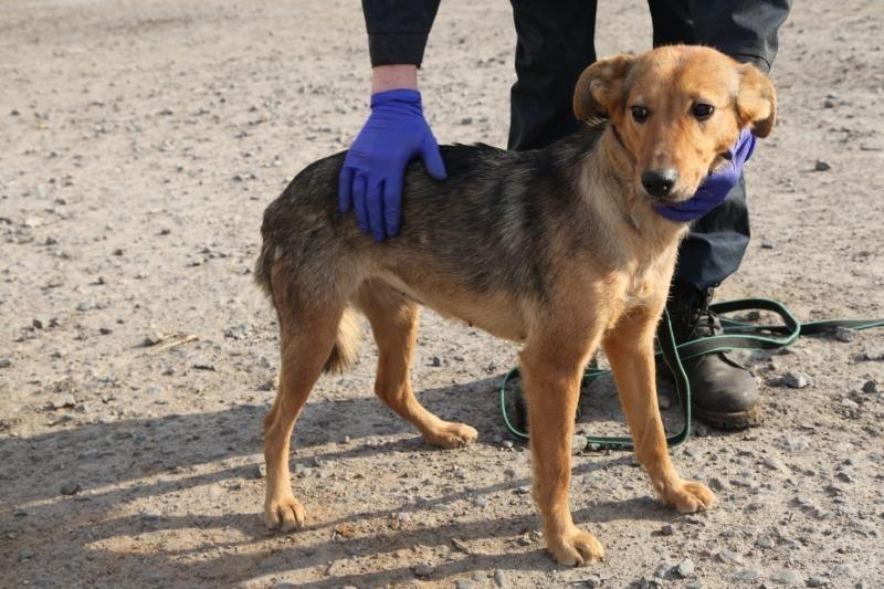 Свора бездомных собак на даче: куда писать и кому жаловаться