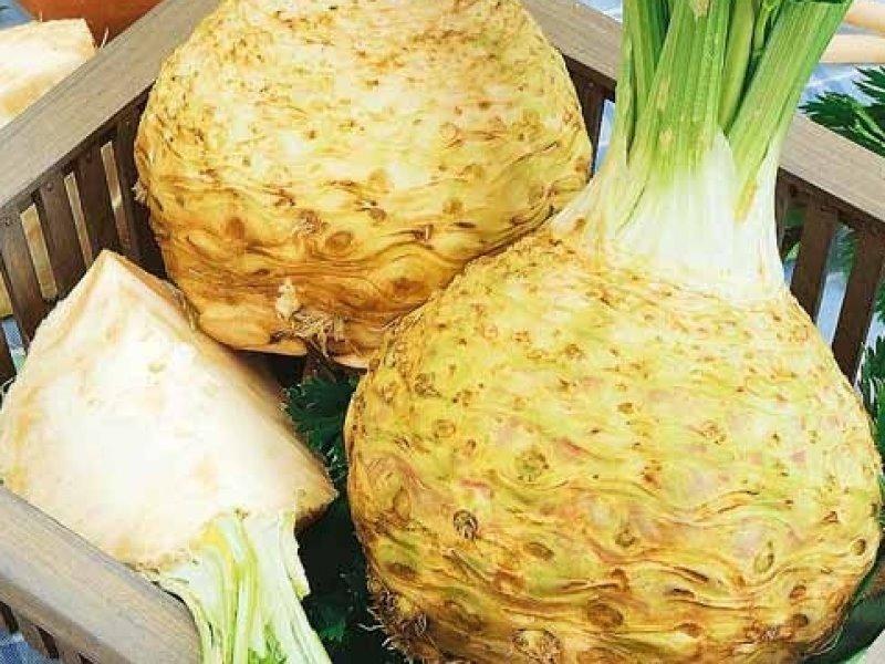 Выращиваем легко: 6 лучших сортов корневого сельдерея