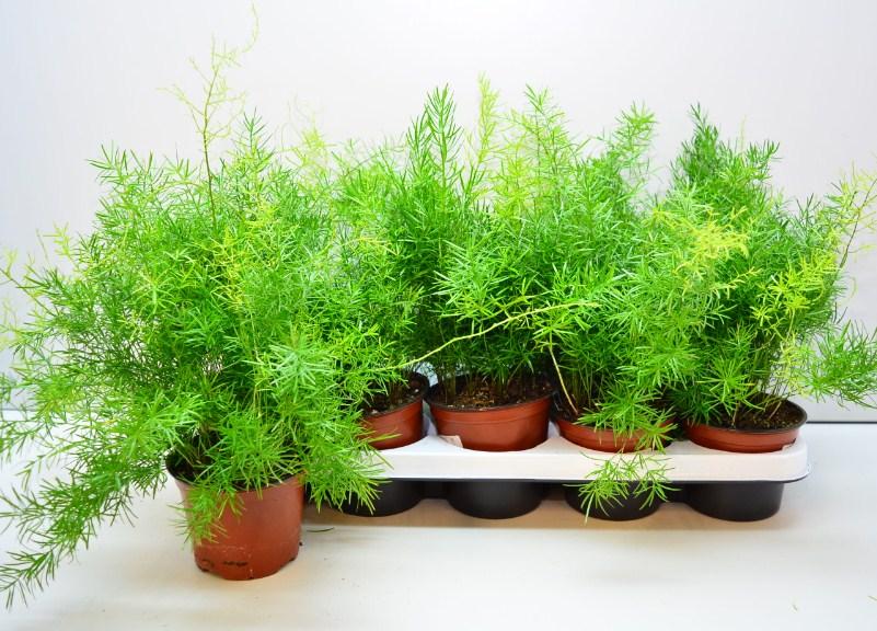 7 комнатных растений, которые прекрасно себя чувствуют даже при слабом освещении