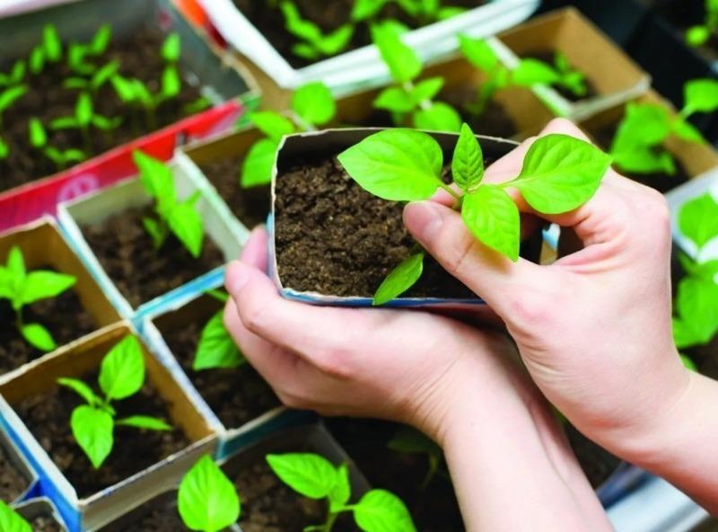 Как выбрать рассаду, которая даст хороший урожай