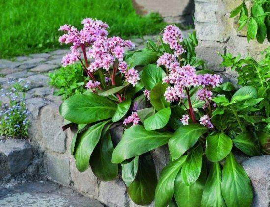 10 почвопокровных растений, которые вытеснят сорняки из сада